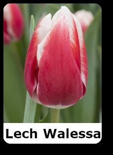 Lech Walessa