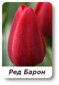 sort Red Baron