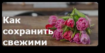 Тюльпаны свежие
