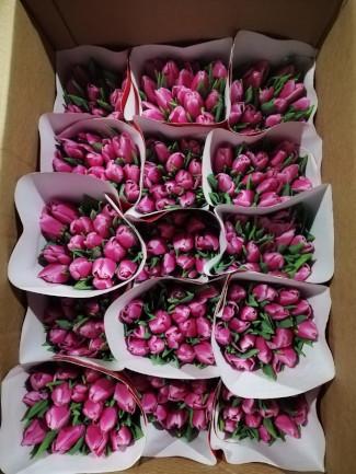 Тюльпаны, сорт Ирина, коробка 225шт