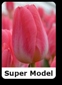 supermodel 3