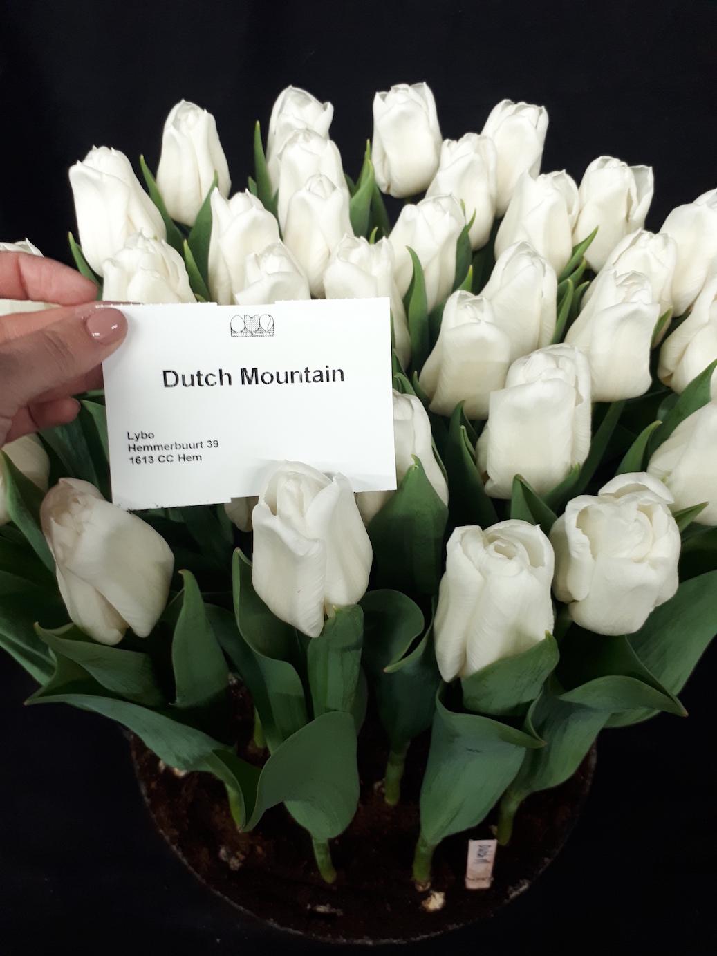 dutch mountain