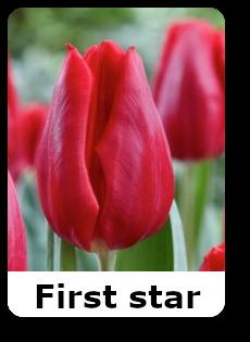 First star 2