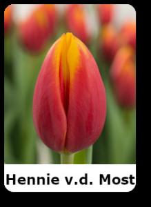 Hennie Van Der Most