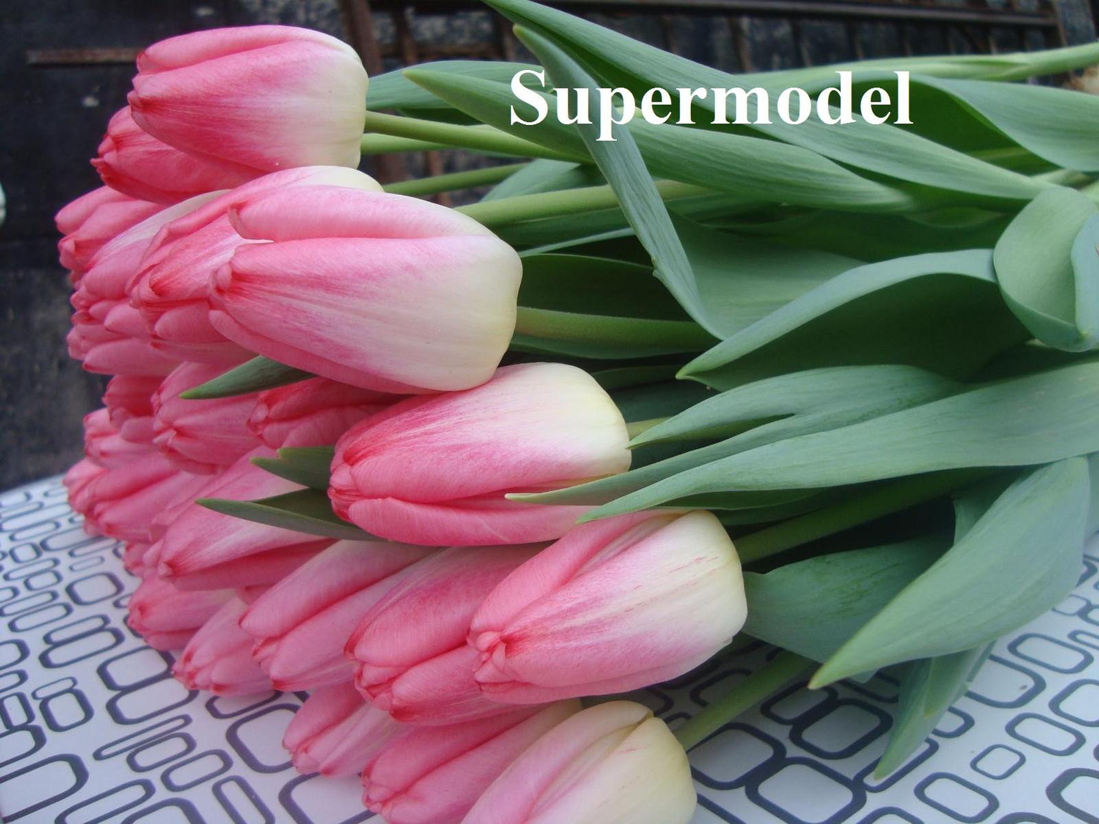 supermodel 1